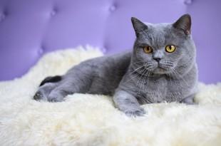 Перхоть у кошки причины, лечение, профилактика